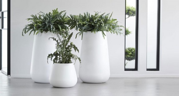 SOLD OUT! Indoor Plant Styling